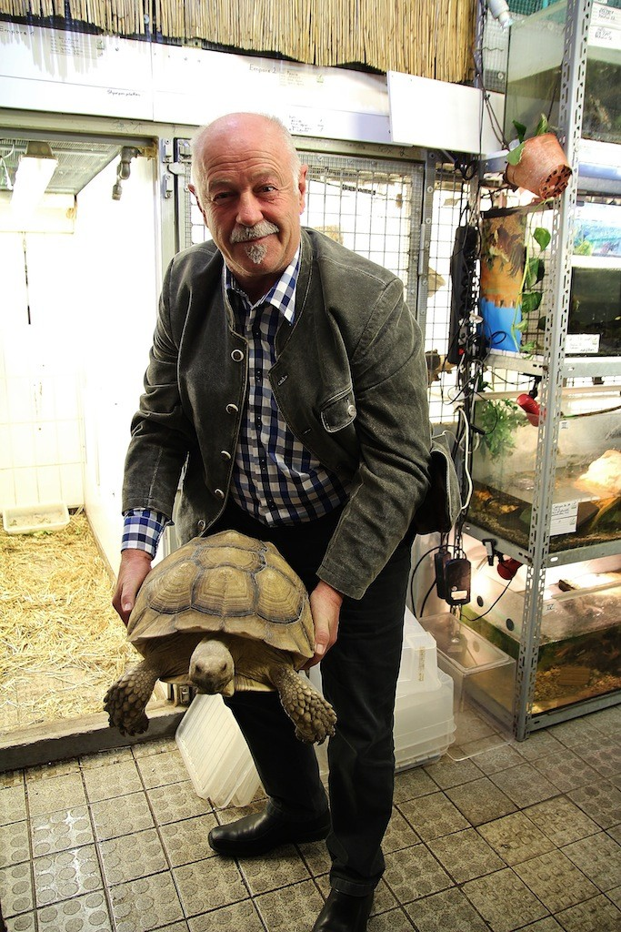 """Die Riesenschildkröte """"Hannibal"""" wurde auf einem S-Bahn-Gleis gefunden. (Foto: Beate Hones)"""