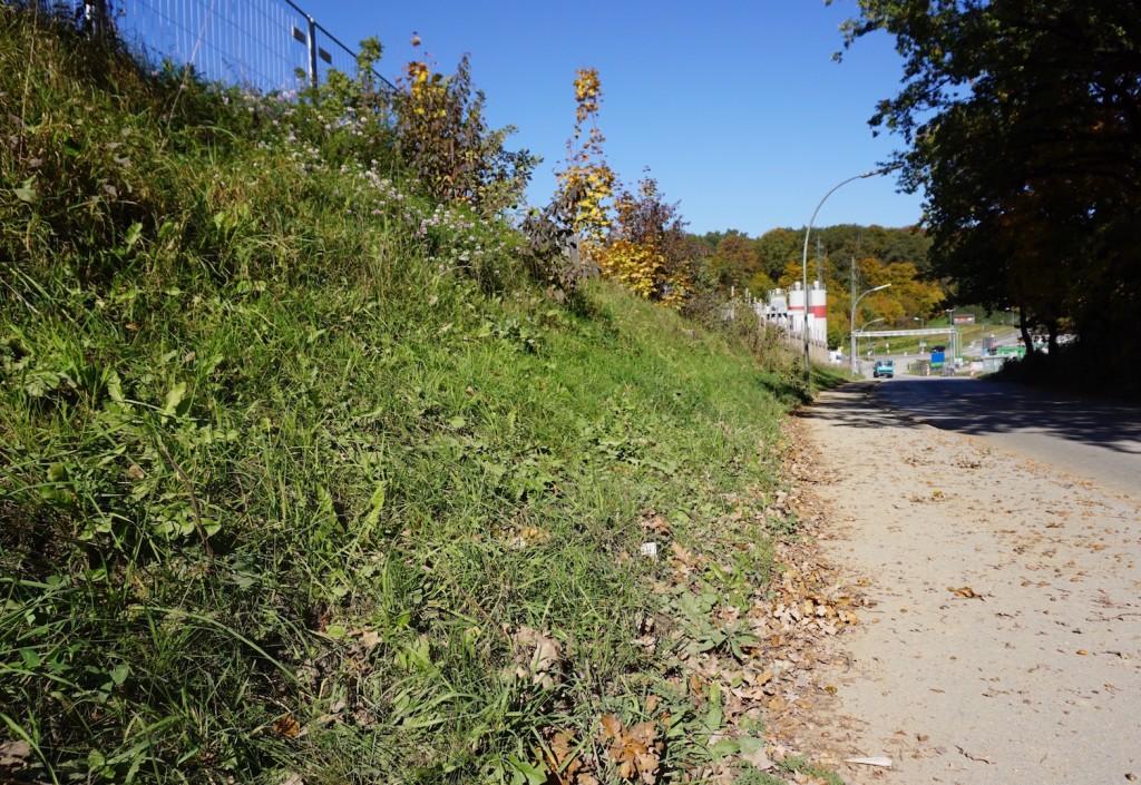 Eh da-Flächen sind überall - und lassen sich mit wenig Aufwand zu wertvollen Lebensräumen umgestalten.